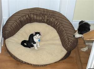 stolen dog beds 21 pets who have had their favorite spots With cat and dog furniture