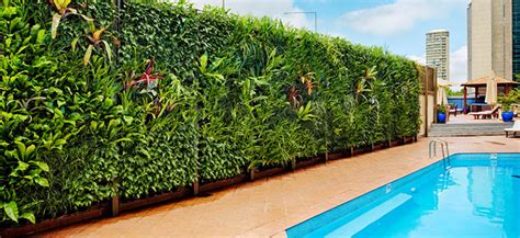 Vertical Garden Friendly Plants-flower Power