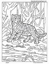 Kelp Coloring Pages Forest Getcolorings Printable sketch template