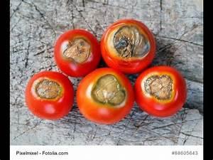 Tomaten Krankheiten Bilder : tomaten bl tenendf ule wie kann man vorbeugen youtube ~ Frokenaadalensverden.com Haus und Dekorationen