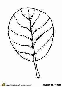 Feuilles D Automne à Imprimer : coloriage la feuille de l aulne de l automne ~ Nature-et-papiers.com Idées de Décoration