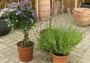 Mediterrane Pflanzen Liste : sortiment pomona baumschulen ~ Watch28wear.com Haus und Dekorationen