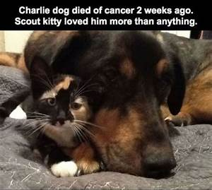 The Sad Story of a Cat Who Lost Her Best Friend (10 pics ...