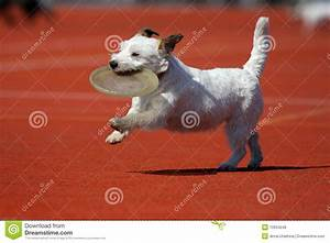 royalty free stock photos dog playing flying disk image