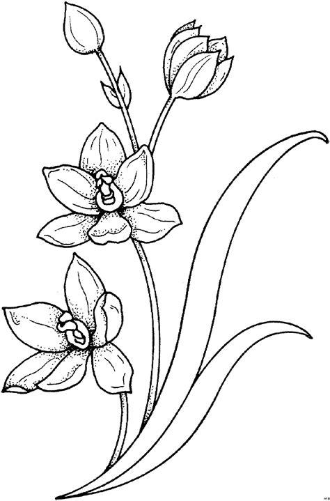 pflanze mit stengel ausmalbild malvorlage blumen
