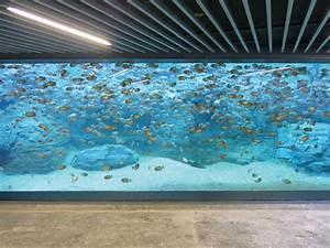 Plexiglas Aquarium Nach Maß : ein riesiges aquarium mit scheiben aus plexiglas ~ Watch28wear.com Haus und Dekorationen