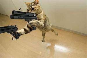 bogel funny pictures: Funny cat with gun picture . funny ...