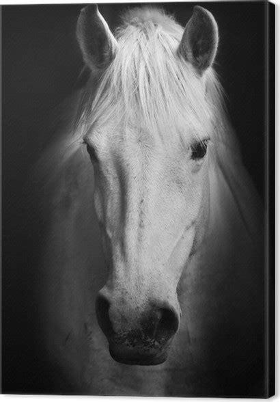 quadro su tela cavallo bianco ritratto  arte  bianco