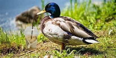 Milkshake Duck Meaning