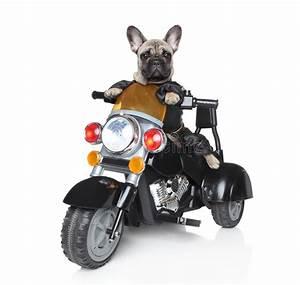 Dog Riding On A Motorcycle Stock Photo - Image: 21573210