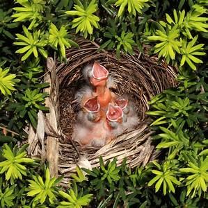 Chicks Hatchling Nest Stock Photo - Image: 41623128