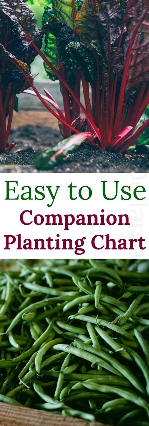 grow chart  vegetables images companion
