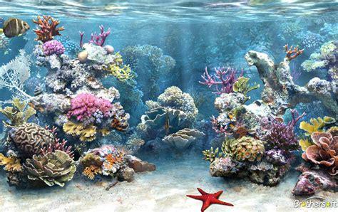 Living Marine Aquarium 2 Animated Wallpaper - aquarium wallpapers and screensavers wallpapersafari