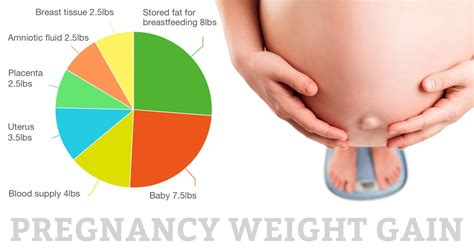 The Truth About Pregnancy Weight Gain Mama Natural