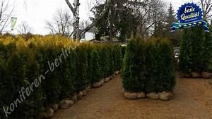 Lebensbaum Hecke Schneiden : thuja smaragd schneiden thuja smaragd schneiden smaragd thuja schneiden thuja hecke lebensbaum ~ Eleganceandgraceweddings.com Haus und Dekorationen