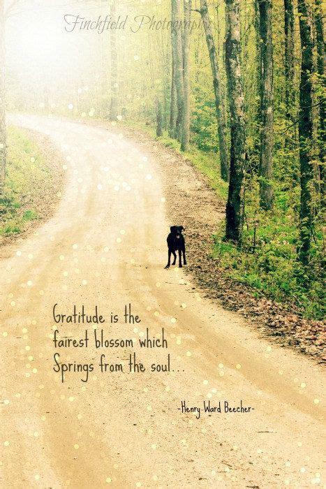 gratitude famous nature quotes quote summer travel trends