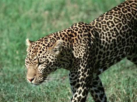 Free Amazing Animal Wallpapers - high definition photo and wallpapers amazing animals