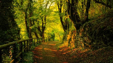 Beauty Autumn Nature Hd Wallpaper  Welcome To Starchop