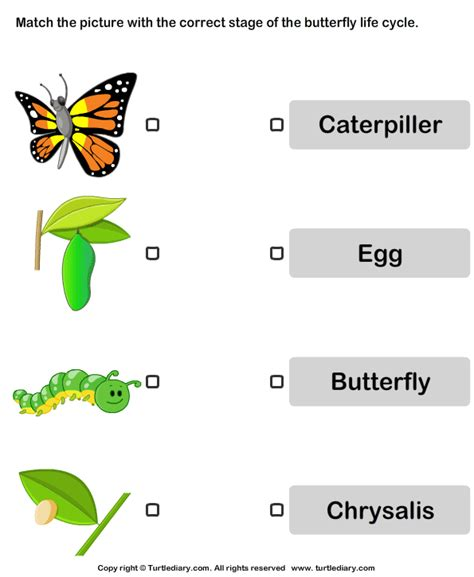 butterfly cycle pictures worksheet turtle diary 100 | butterfly life cycle pictures