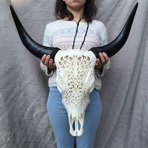 Deco Crane De Buffle : cr ne de buffle sculpt longueur 70 cm largeur 63 cm catawiki ~ Melissatoandfro.com Idées de Décoration
