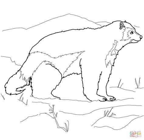 Arctic Animal Coloring Pages Arctic Coloring Page