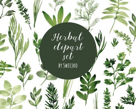 Digital Clipart, Watercolor Herbs, Hand Painted Leaves