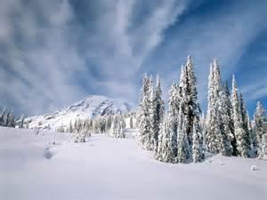 winter trees winter wallpaper 509499 fanpop
