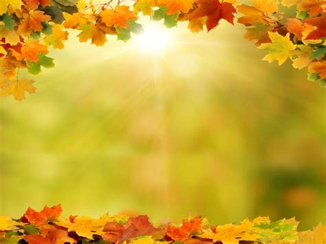 background  autumn leaves art backgrounds