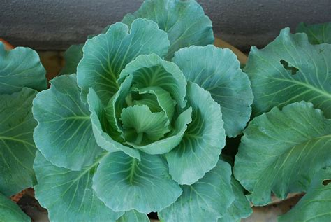 My Little Vegetable Garden