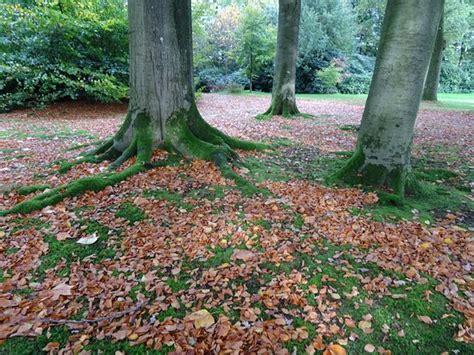 wiersse tuinen de tuinen van de wiersse vorden nederland beoordelingen