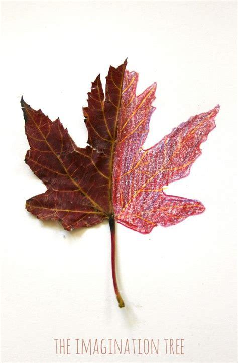 mirror leaf drawings nature art leaf drawing leaf art