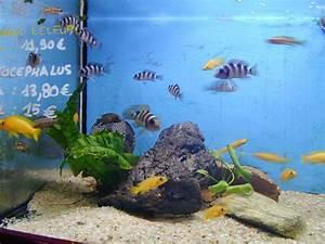 Poisson Aquarium Eau Chaude : aquarium eau chaude blog photo de peche ~ Mglfilm.com Idées de Décoration