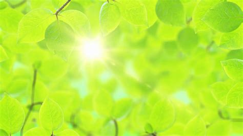 Pretty Green Background Pretty Green Backgrounds 39 Images