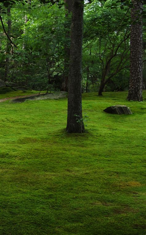 growing moss lawn the truth about moss dispelling moss myths moss and stone gardens