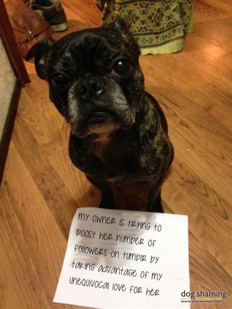 dog pictures put dog shaming  shame