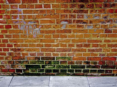 The Wallpaper Backgrounds Brick Wallpaper