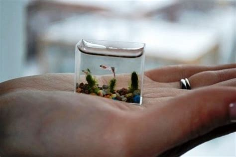 worlds smallest fish info planet