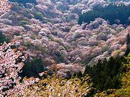 Nature Spring Flowering Trees