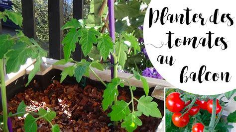 planter des tomates en pot pour le balcon astuce anti pucerons