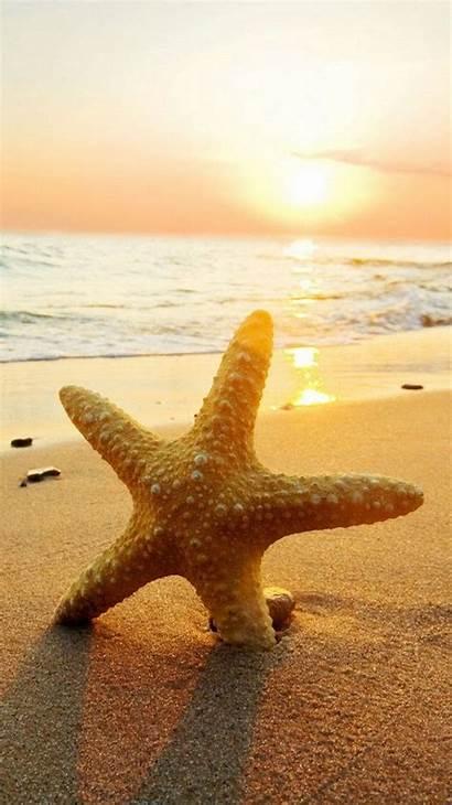 Starfish Beach Mobile Resolution Natural
