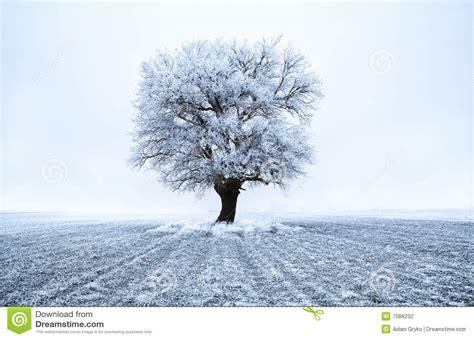 Frozen Tree Stock Photography   Image: 7086232