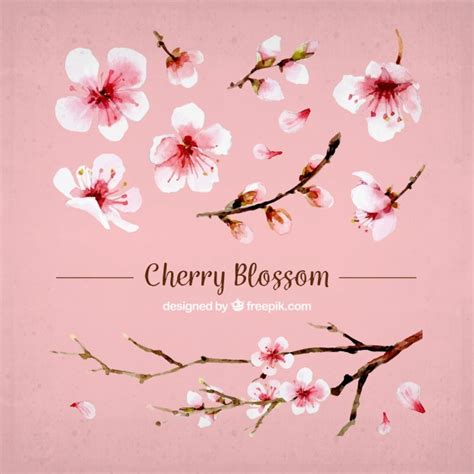 set of cherry blossoms and watercolor branch vector free