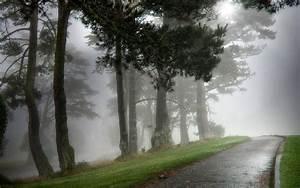 Morning fog aesthetic landscape desktop wallpaper 7 ...