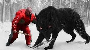 TOP 10 STRONGEST DOGS IN THE WORLD. Ноутбуки