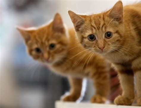 why cats attracted don them cat slate animals quora