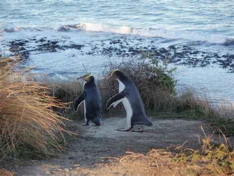 Pictures Slideshow Otago Peninsula Dunedin New Zealand