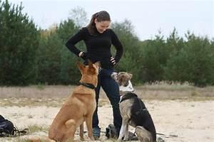 Hund In Mietwohnung Trotz Verbot : hunde knigge die spreew lfe ~ Lizthompson.info Haus und Dekorationen