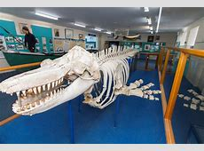 Eden Killer Whale Museum Eden NSW Sapphire Coast