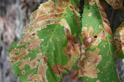 Fighting Fire Blight And Other Bacterial Diseases With