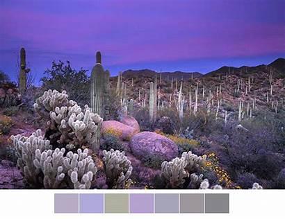 Nature Amazing Landscape Colors Desert Palettes Palette